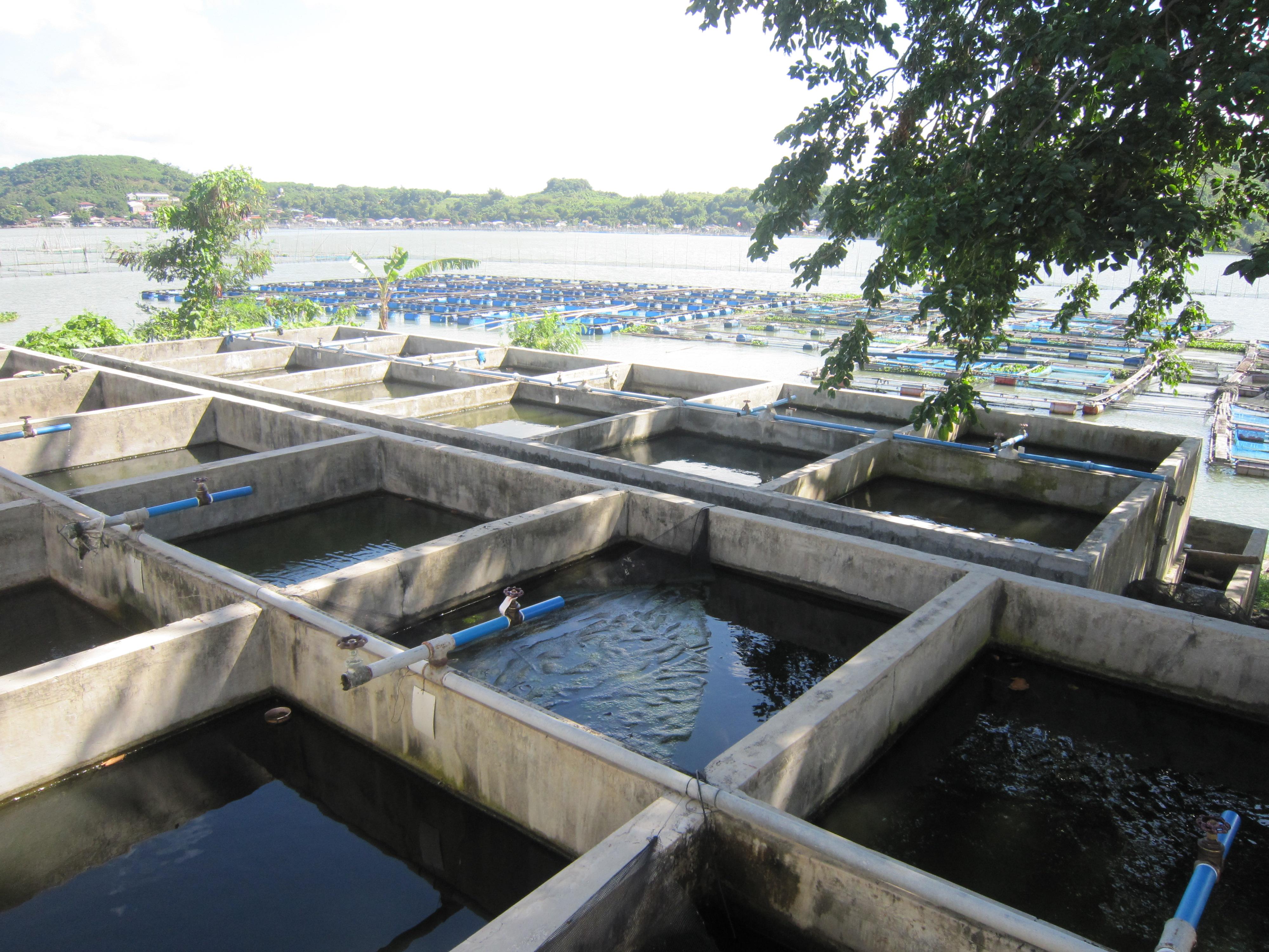 Binangonan Freshwater Station – SEAFDEC/AQD