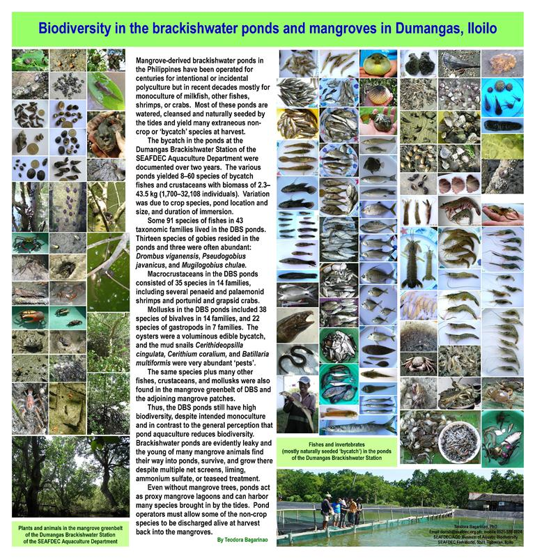 Poster Bagarinao Biodiversity in ponds and mangroves DBS 46 in x 48 in