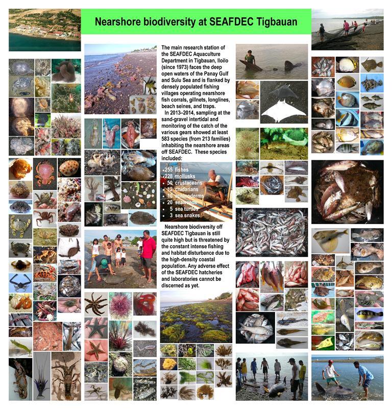 Poster Bagarinao Biodiversity nearshore TMS