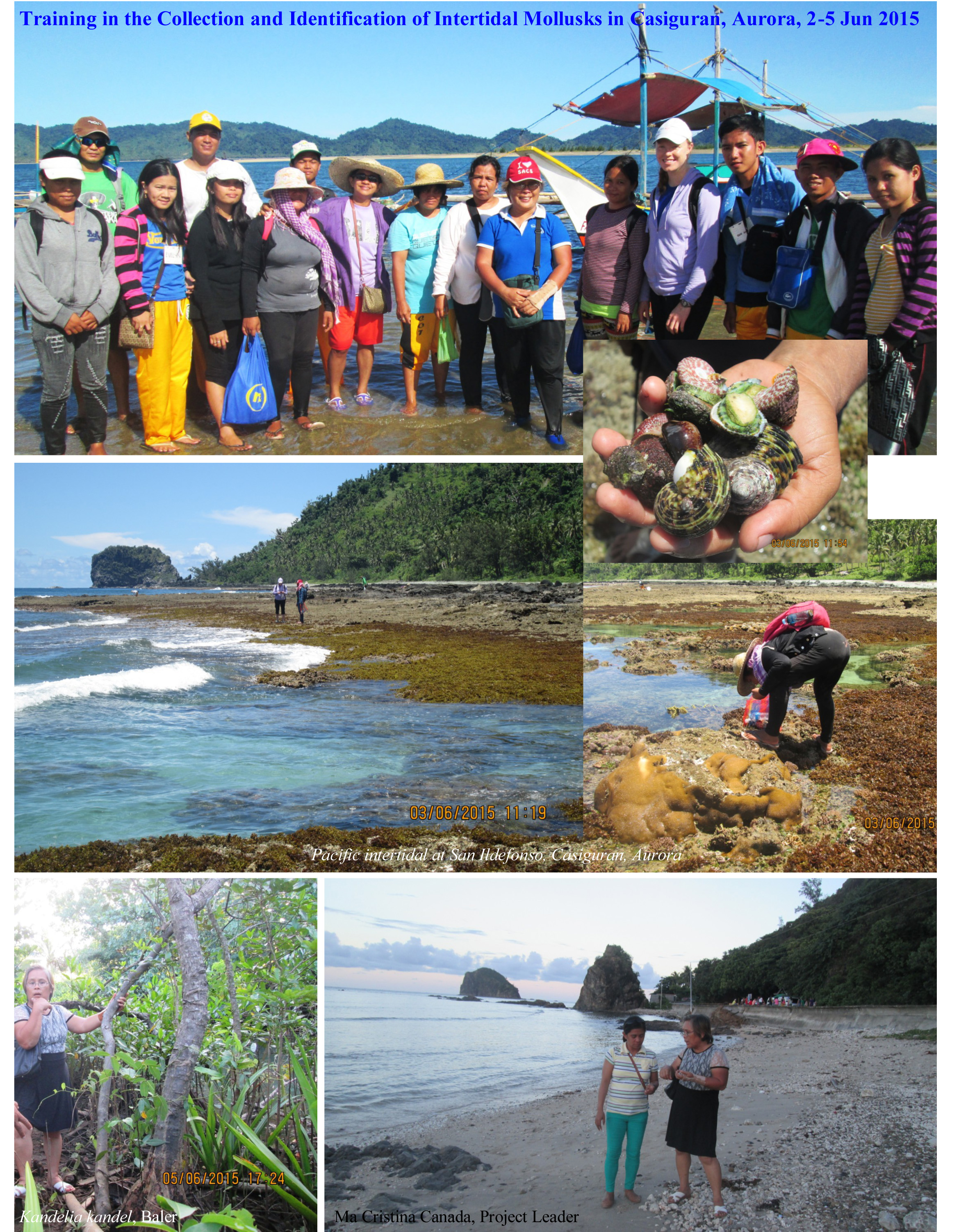 Training in Mollusk Collection and Identification, Casiguran