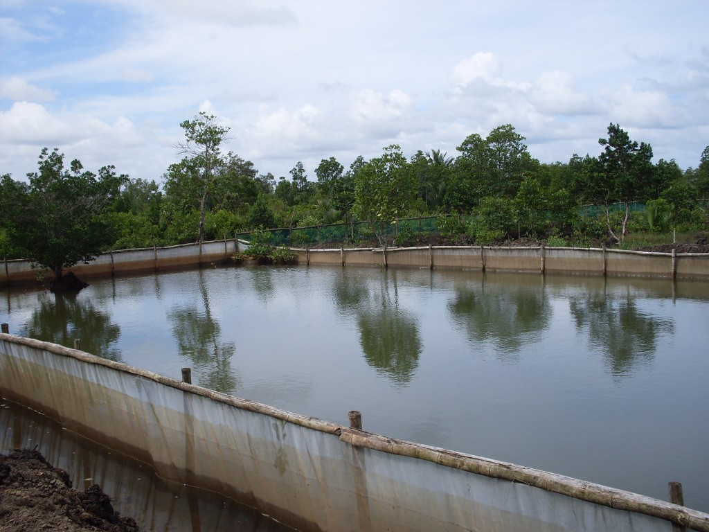 Nursery seafdec philippines for Preparing pond water for fish