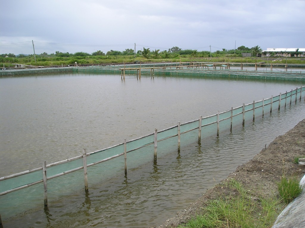 Grow out seafdec philippines for Fish pond preparation