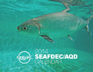 2014 AQD CALENDAR cover thumbnail