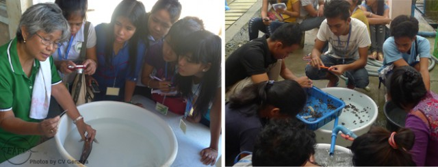 The trainees during their practical sessions at the marine fish (right) and abalone hatcheries (left)