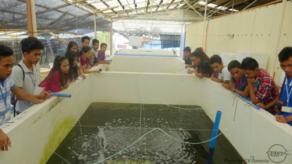 A tour at the sandfish hatchery as part of the internship orientation