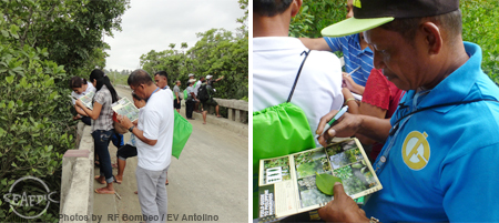 Participants identify mangrove species in Ibajay, Aklan