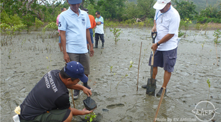 Planting of mangrove seedlings in Ajuy, Iloilo