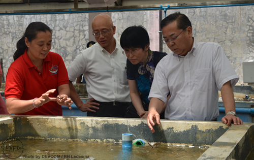 AQD scientist Dr. Evelyn Grace Ayson shows the seaweed plantlets grown at AQD  Tigbauan Main Station to SEAFDEC Secretariat technical coordinator Mr. Tsuyoshi Iwata (2nd from left),  Ms. Hiromi Adachi, and Dr. Yokoyama (rightmost)