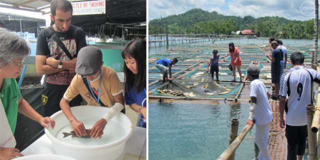 Marine fish. (Left) Trainees during the practicals on induced spawning of rabbitfish at TMS' marine fish hatchery and during the visit to a grouper cage farm in Cagay, Roxas City