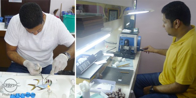 Trainee Mr. Abdulmohsen Ibrahim Alasous during laboratory exercises (collects blood and other organs from a pompano and prepares histological sections)