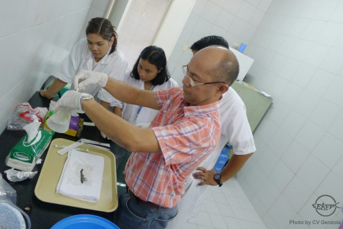 AQD scientist Dr. Edgar Amar shows the trainees how to examine diseased shrimp
