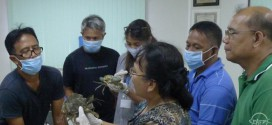 SEAFDEC/AQD's mud crab course-session 2 wraps up