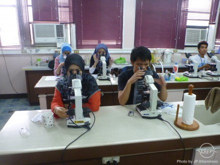 Participants check under the microscope the different algal species