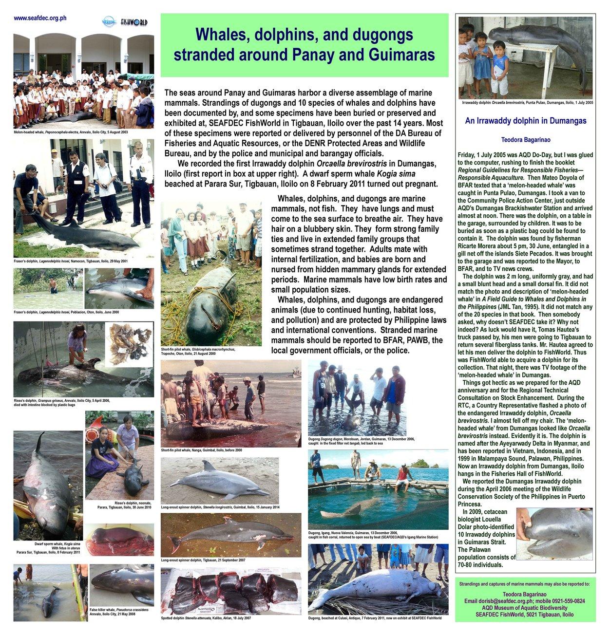 Marine Mammals Capitol 5Kpix
