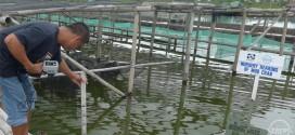 SEAFDEC/AQD trains Santeh staff on soft-shell crab farming
