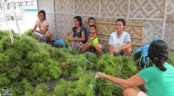 Figure 1. Young women engaged in seaweed farming in Bohol, Philippines.