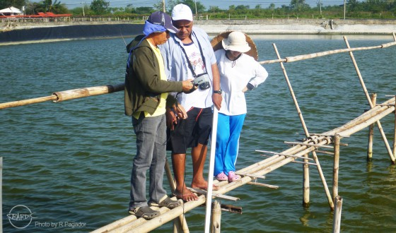 Mr. Ngalaufe (middle) learns about pond preparation from AQD's Dumangas Brackishwater Station staff