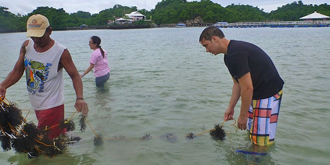 Mr. Darrin Seeto at AQD's Igang Marine Station during his practical on seaweed farming