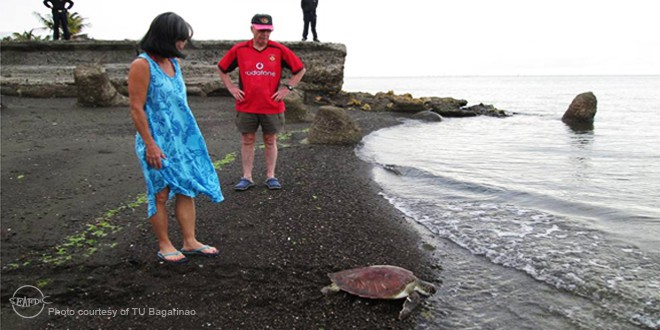sea turtles__cp