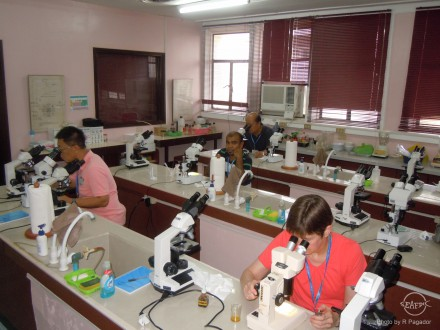 Participants check the different algal species under the microscope