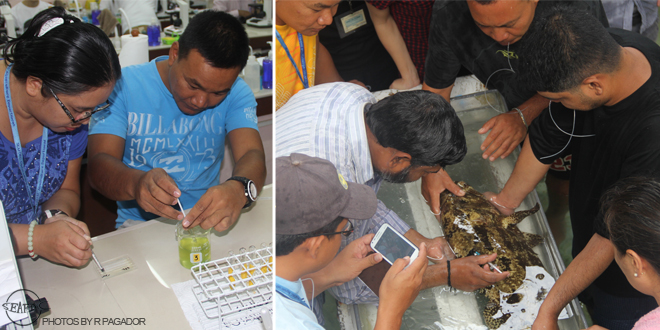 Trainees practical activities includes counting of Artemia at the laboratory and sampling of grouper broodstock at the hatchery