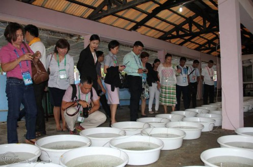 The delegates during their tour at the integrated marine fish hatchery where newly harvested milkfish fry are distributed into basins before packing and transport
