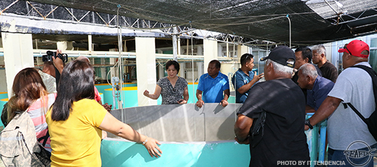 SEAFDEC/AQD Research Division Head Dr. Evelyn Grace Ayson shows to the visitors from Palau the marine fish species produced in SEAFDEC/AQD's hatchery
