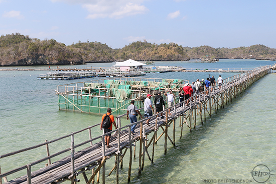 Palauan guests at SEAFDEC/AQD's Igang Marine Station