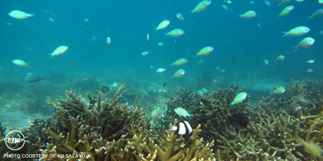 The corals in the CBSE demo-site recovered due to protection by local stakeholders