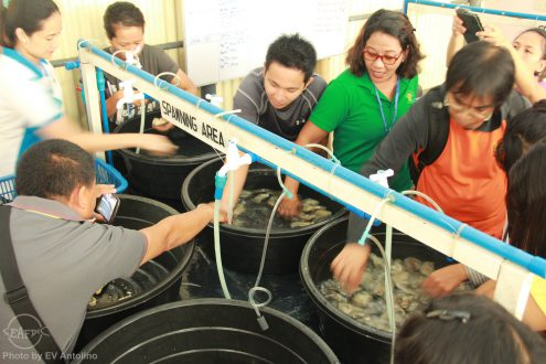 The participants during their practical on oyster hatchery operations