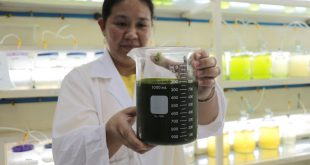 Algae paste at the SEAFDE/AQD Phycology Laboratory